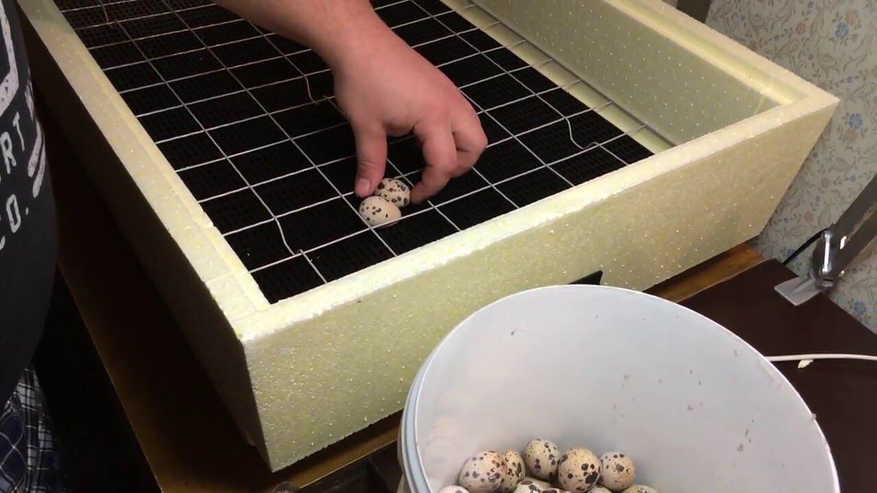 Инкубаторы для куриных яиц своими руками 14